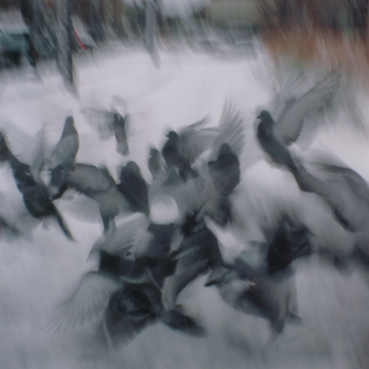 pigeons-with-holga-flying-in-boston(pp_w800_h800)